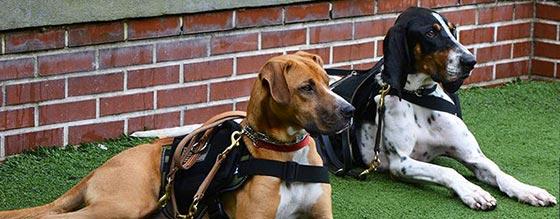Brews for Barks, K9s for Warriors, Charity Event Orlando, Dog Charity Orlando, Pet Rescue Orlando, Orlando Brewing