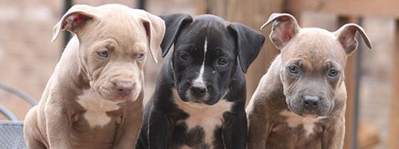 Dog Rescue Orlando, Dog Rescue Fundraiser, Sniffing Snouts Orlando, Pitbull Orlando, Adoptable Dogs Orlando, Orlando Brewing